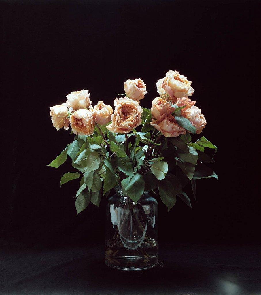 Black-Roses.jpg